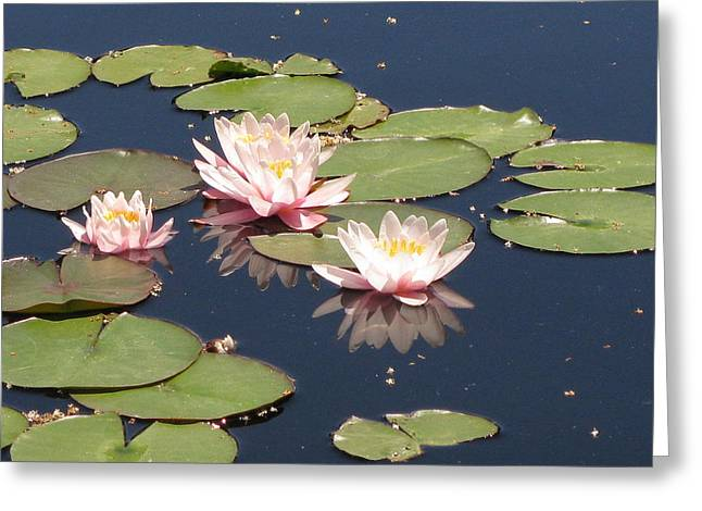 Day Lilly Greeting Cards - Reflections of Colorado Greeting Card by Shawn Hughes