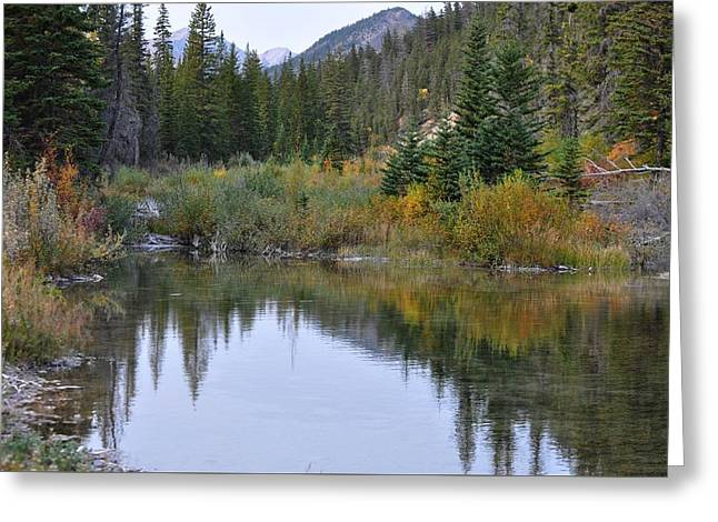 Pool In Cave Greeting Cards - Fall Reflections Greeting Card by Diana Nigon