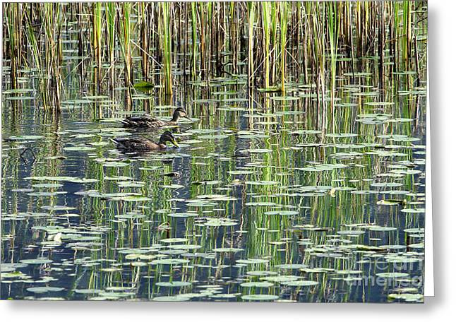 Reflections On Duck Pond Greeting Card by Sharon Talson