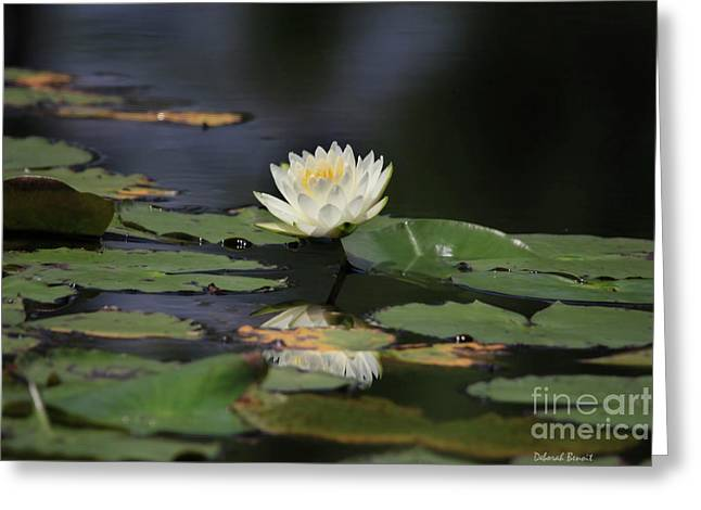 Water Lilly Greeting Cards - Reflective Lilly Greeting Card by Deborah Benoit