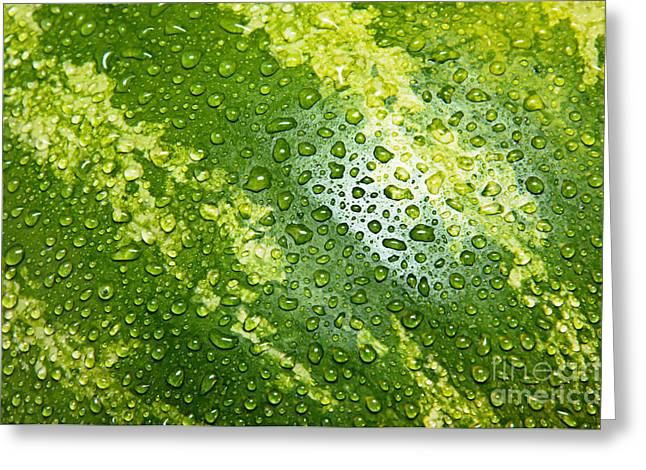 Melon Greeting Cards - Refreshing Watermelon Greeting Card by Andee Design