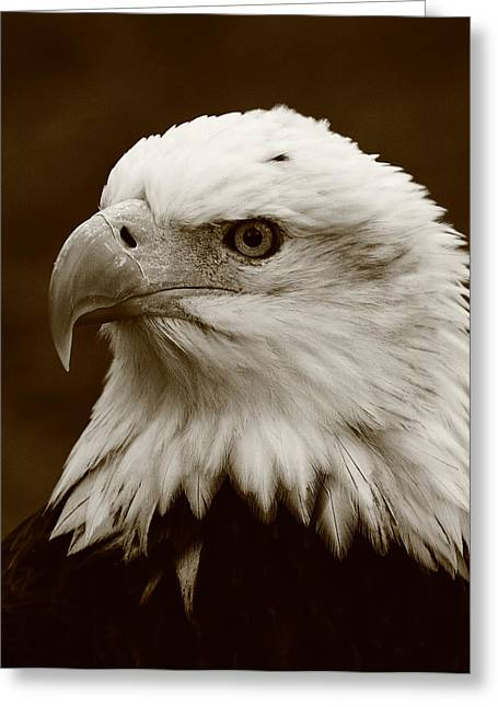Eagle Greeting Cards - Regal  Eagle Greeting Card by Bruce J Robinson