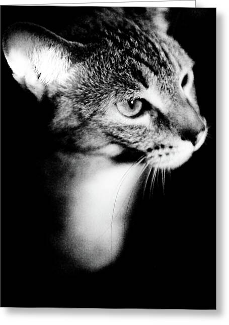 Cat Picture Greeting Cards - Regal Feline Greeting Card by Scott Sawyer