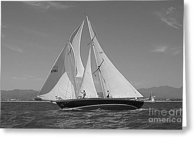 Sailer Greeting Cards - Regatta 09 Puerto Vallarta Mexico Greeting Card by Nicola Fiscarelli