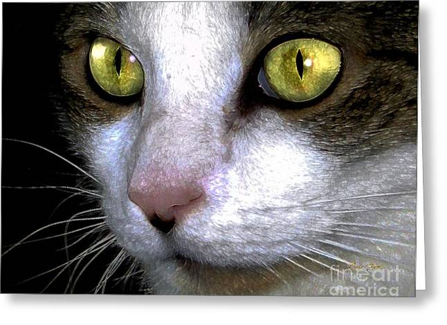 Photos Of Cats Digital Greeting Cards - Reggie Eyes Greeting Card by Dale   Ford