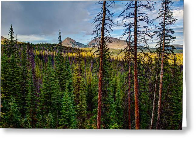 Pine Tree Photographs Greeting Cards - Reids Peak Greeting Card by Chad Dutson