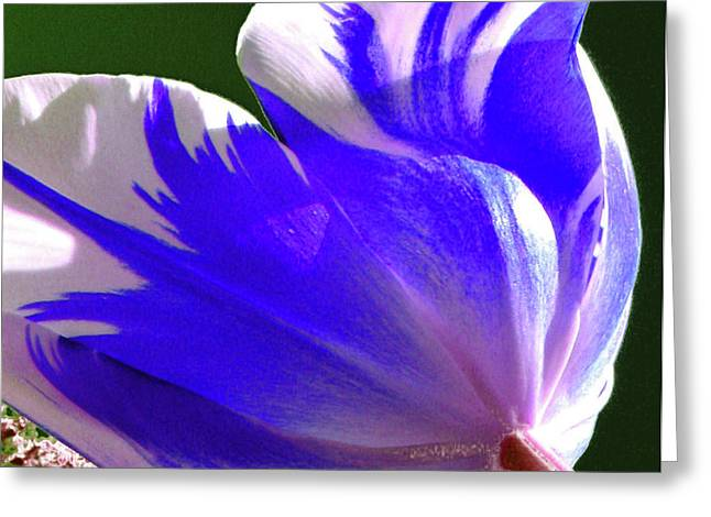 Reigning Tulips Greeting Card by Christine Belt