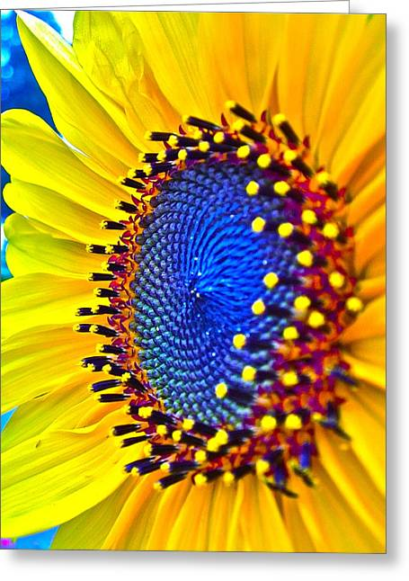 Best Sellers -  - Yellow Sunflower Greeting Cards - Rejoice Greeting Card by Gwyn Newcombe