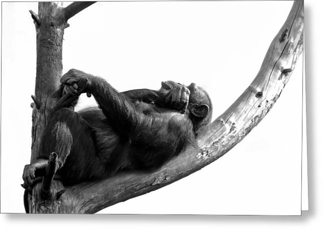 Chimpanzee Greeting Cards - Relax Greeting Card by Gert Lavsen