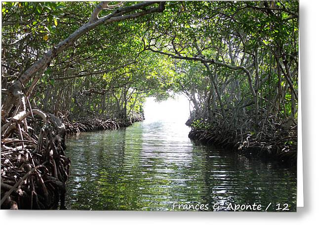 Best Sellers -  - Mangrove Forest Greeting Cards - Relax paradaise Greeting Card by Frances G Aponte
