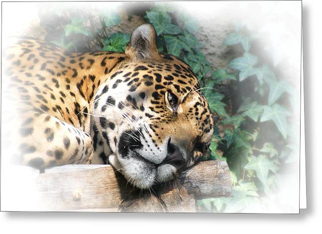 Relaxing 2 Greeting Card by Ernie Echols