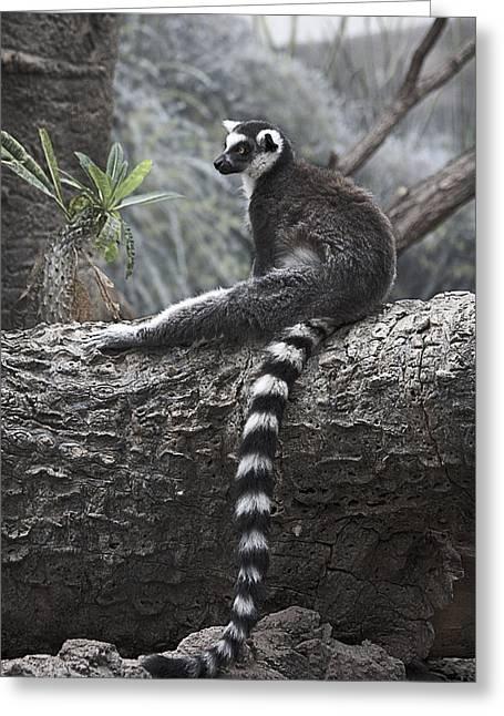Lemur Greeting Cards - Relaxing at Noon  Greeting Card by Yosi Cupano