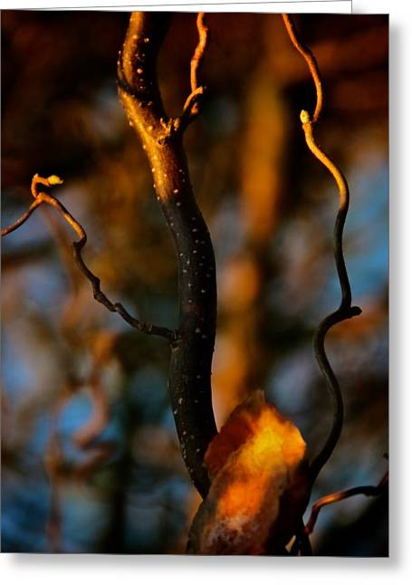 Soft Light Greeting Cards - Releasing Flares Greeting Card by Odd Jeppesen