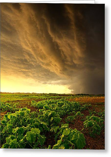 Relief Greeting Card by Phil Koch