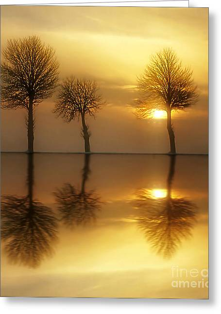 Sunset Tree Greeting Cards - Remains of the Day Greeting Card by Photodream Art