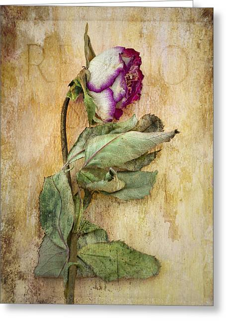 Texture Floral Photographs Greeting Cards - Remembrance Greeting Card by Marion Galt