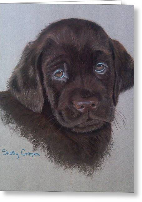 Puppies Pastels Greeting Cards - Remi Greeting Card by Shelly Crippen