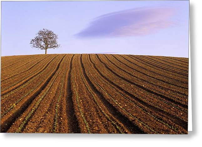 Cultivation Greeting Cards - Remote tree in a ploughed field Greeting Card by Bernard Jaubert
