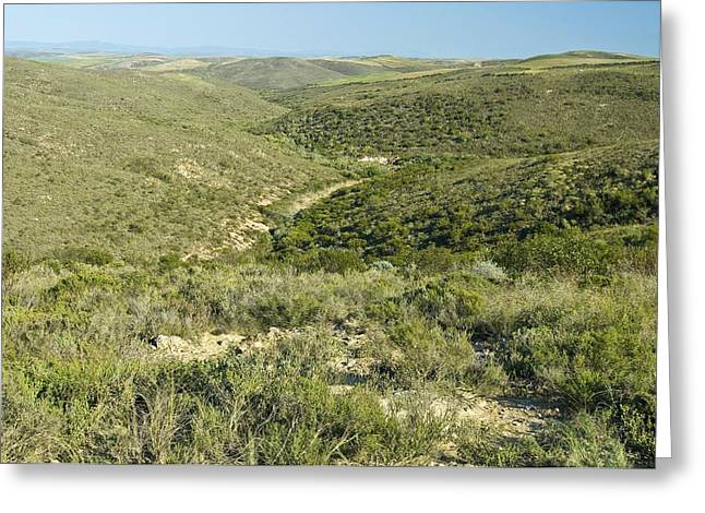 Cfr Greeting Cards - Renosterveld Conservation Area Greeting Card by Peter Chadwick