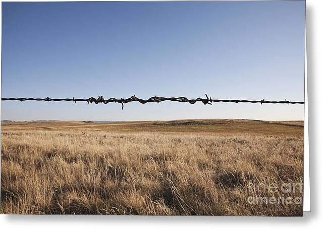 Repaired Strand of Barbed Wire Greeting Card by Jetta Productions, Inc