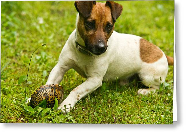 Houndogs Greeting Cards - Reptilian Coniverous Hound Greeting Card by Douglas Barnett