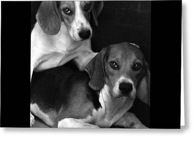 Beagle Greeting Cards - Rescued 1 Greeting Card by Laura Melis