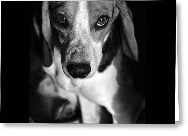 Two Hounds Greeting Cards - Rescued 6 Greeting Card by Laura Melis