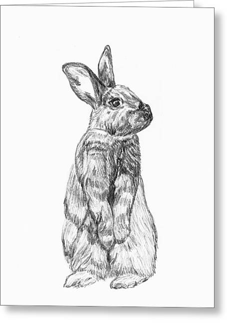 Rescue Drawings Greeting Cards - Rescued Rabbit Greeting Card by Katherine Dohnalek
