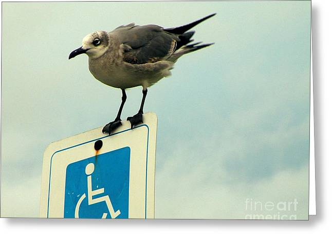Humorous Greeting Cards Greeting Cards - Reserved Perching Greeting Card by Joe Jake Pratt