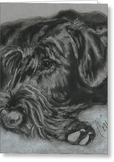 Giant Schnauzer Greeting Cards - Restful Thoughts Greeting Card by Cori Solomon