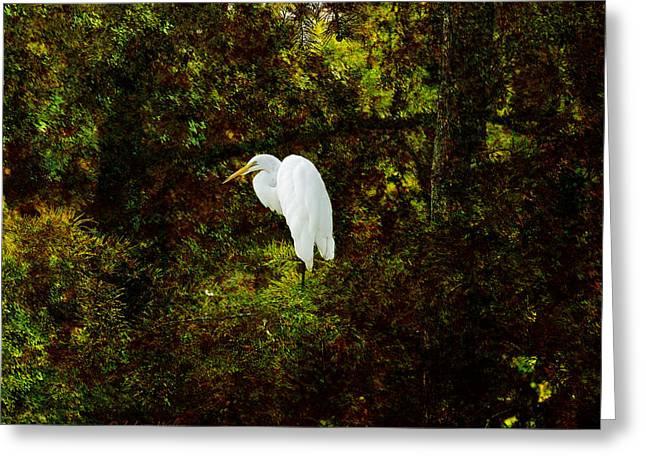 Cypress Tree Digital Art Greeting Cards - Resting Egret Greeting Card by J Larry Walker