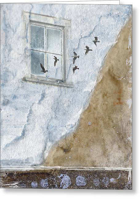 Gulls Greeting Cards - Return Flight Greeting Card by Carol Leigh