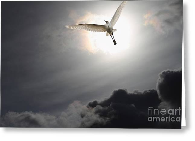 Return To Eternity Greeting Card by Wingsdomain Art and Photography