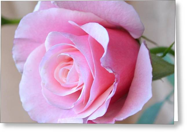 Reverence Greeting Cards - Reverence Rose Greeting Card by Patricia S