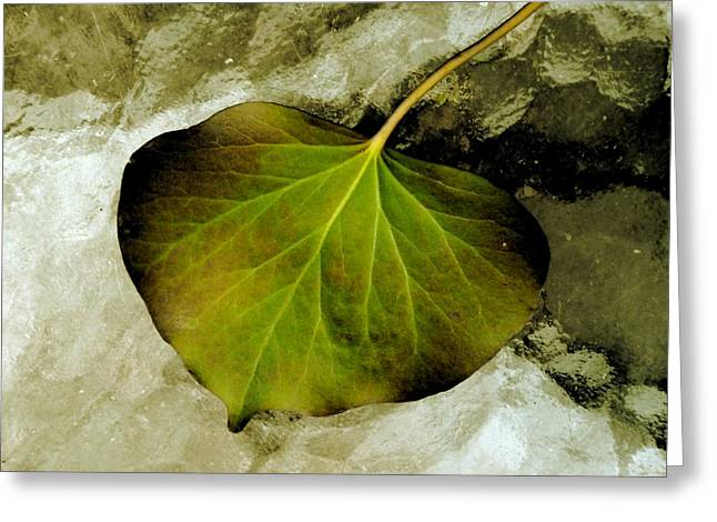 Reverse Art Greeting Cards - Reverse Ivy Greeting Card by Beth Akerman