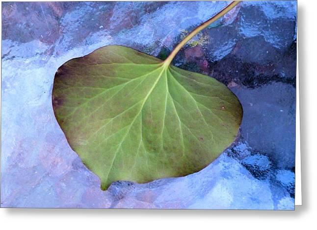 Reverse Art Greeting Cards - Reverse Ivy on Blue Greeting Card by Beth Akerman