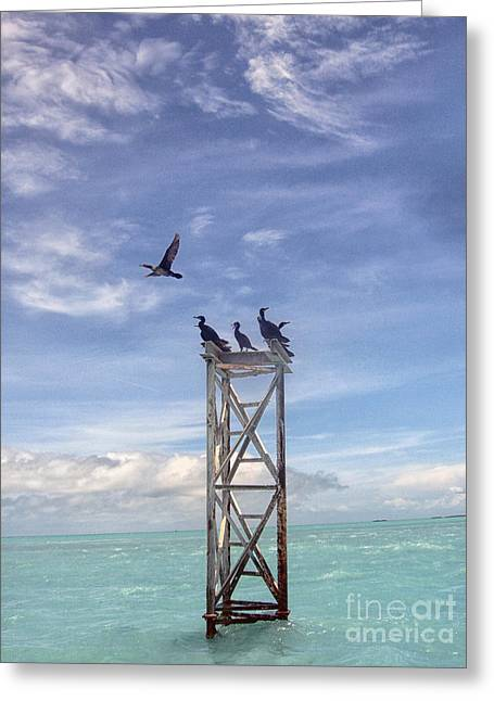 Best Sellers -  - Wooden Platform Greeting Cards - Revised Image of Birds on Wooden Stand in The Ocean off Key West Greeting Card by Christopher Purcell