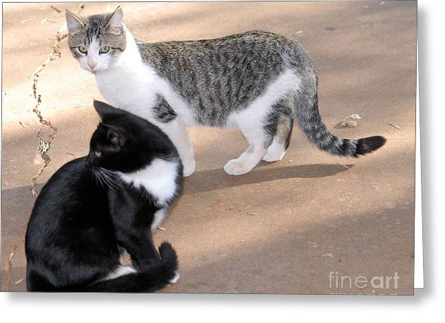 Photos Of Kittens Greeting Cards - Rex and Socks Greeting Card by Cheryl Poland