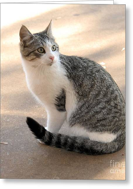 Photos Of Kittens Greeting Cards - Rex Greeting Card by Cheryl Poland