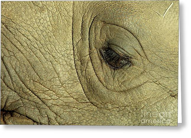 Rhinoceros Greeting Cards - Rhino Eye Greeting Card by Marc Bittan