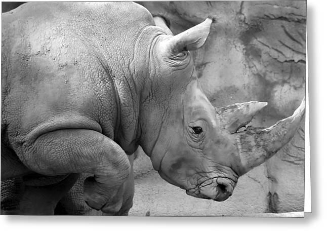 Indian Rhinoceros Greeting Cards - Rhino profile Greeting Card by Gordon Dean II