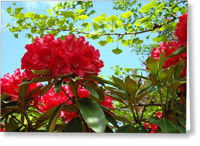 �rhodies Flowers� Greeting Cards - Rhodies art prints Red Rhododendron Floral Garden Landscape Baslee Greeting Card by Baslee Troutman Fine Art Print Collections