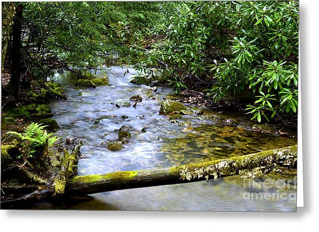 Rhododendron Maximum Greeting Cards - Rhododendron and Mountain Stream Greeting Card by Thomas R Fletcher