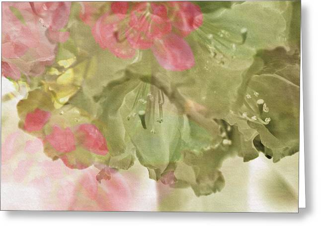 Pink And Green Hues Greeting Cards - Rhododendron  Greeting Card by Bonnie Bruno