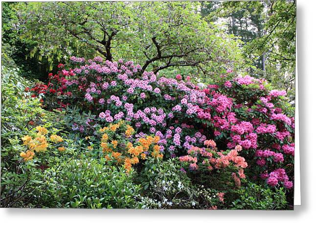 Green Foliage Greeting Cards - Rhododendron Hill Greeting Card by Carol Groenen
