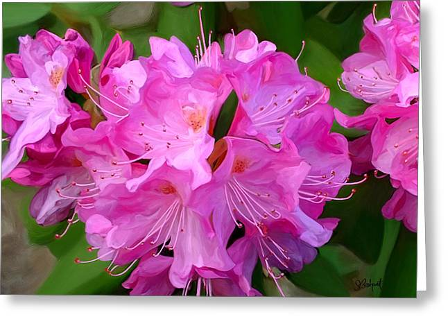 Sue Brehant Greeting Cards - Rhododendron Greeting Card by Sue  Brehant