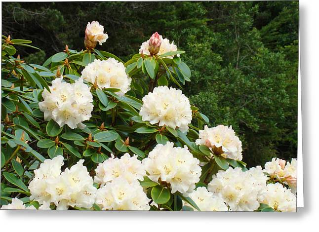 �rhodies Flowers� Greeting Cards - Rhododendrons Floral Landscape Art Prints Baslee Troutman Greeting Card by Baslee Troutman Fine Art Prints Collections