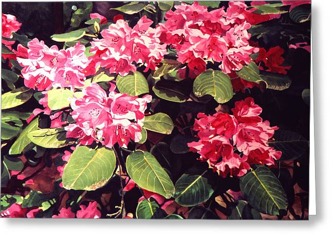 Rhododendrons Greeting Cards - Rhododendrons Rothschild Greeting Card by David Lloyd Glover