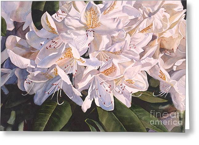Rhododendrons Greeting Cards - Rhody in the Morning Sun Greeting Card by Sharon Freeman