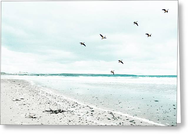 Flying Seagull Greeting Cards - Rhosneigr Beach Greeting Card by Nomad Art And  Design